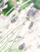 lavender-wedding-provence-luberon-hotel-moulin-beaumier-lourmarin