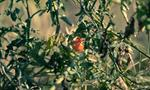 vegetable-plant-garden-products-hotel-les-roches-rouges-beaumier-saint-raphael