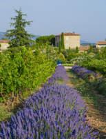 lavender-hotel-provence-luberon-capelongue-beaumier-bonnieux