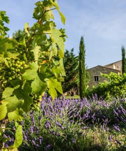 hotel-garden-design-provence-luberon-capelongue-beaumier-bonnieux