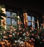 chalets-summer-flowers-hotel-alpaga-beaumier-megeve