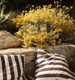 jardin-nature-hotel-les-roches-rouges-beaumier-saint-raphael